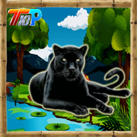 Rescue The Black Cheetah